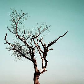 Guna Andersone - Lonely tree in desert