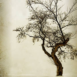 Teresa Jack - Lonely Tree in the Snow