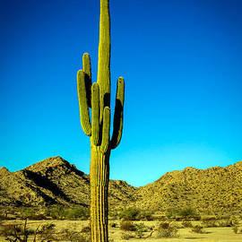 Robert Bales - Lonesome Saguaro
