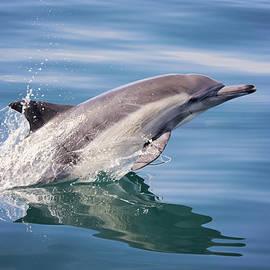 Deana Glenz - Long Beaked Common Dolphin