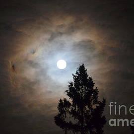 Jaunine Ammerman - Long Night Moon