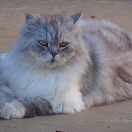 Dorothy  Pugh - Longhair Cat