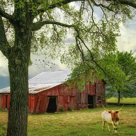 Priscilla Burgers - Longhorn at the Farm