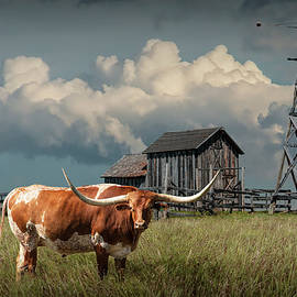 Randall Nyhof - Longhorn Steer in a Prairie pasture by Windmill and Old Gray Wooden Barn