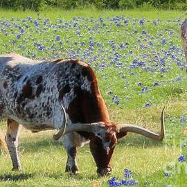 Janette Boyd - Longhorns in the Bluebonnets