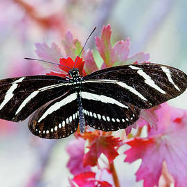 Ruth Jolly - Longwing on pink