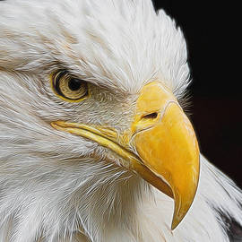 Ernie Echols - Look of the Eagle