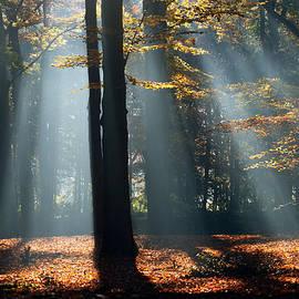 Roeselien Raimond - Lost in The Light