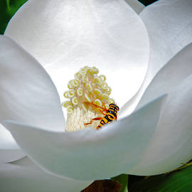 Audie T Photography - Magnolia and Bee