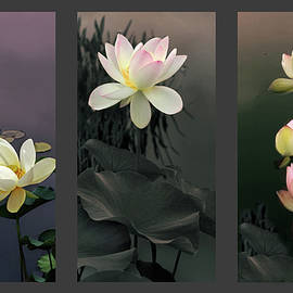 Lotus Collection II - Jessica Jenney