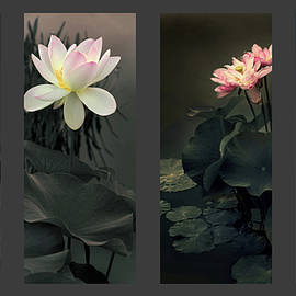 Lotus Collection - Jessica Jenney