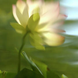 Jill Love - Lotus Reflection