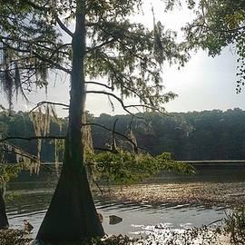 Louisiana Bayou Country Silhouettes