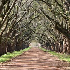 Charlotte Schafer - Louisiana Oaks