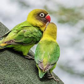 Morris Finkelstein - Lovebirds On A Roof