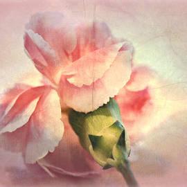 Kathy Bucari - Lovely