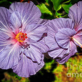 Sue Melvin - Lovely Lavender Hibiscus