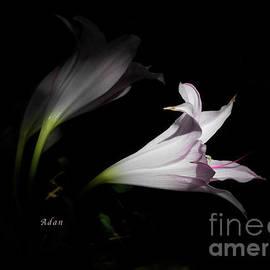 Felipe Adan Lerma - Lovely Lilies Dreams to Light