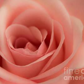 Arlene Carmel - Lovely Peach