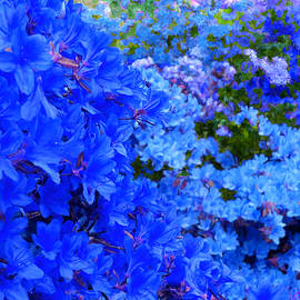 Bruce Nutting - Loving Blue Flowers
