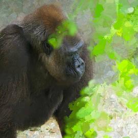 Judy Kay - Lowland Gorilla