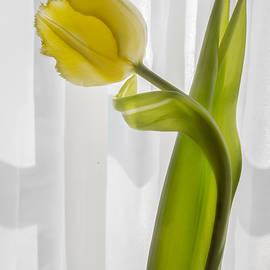 F Leblanc - Luminous Blossom