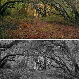 Frank Bez - Lupine Canyon Oaks