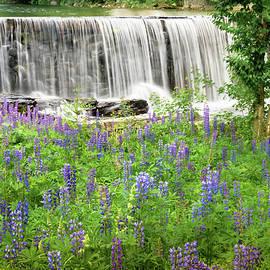 Alan Brown - Lupine waterfall