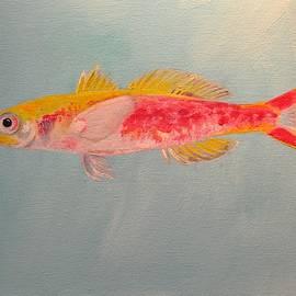 Eduard Meinema - Luzonichthys seaver