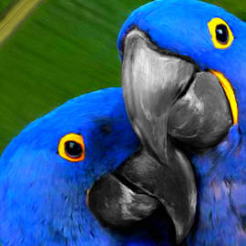 Bruce Nutting - Macaw in Love