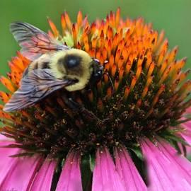 Debra     Vatalaro - Macro Bee
