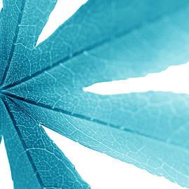 Jennie Marie Schell - Macro Leaf Turquoise