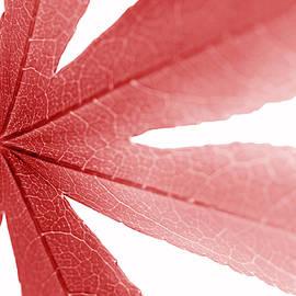 Jennie Marie Schell - Macro Red Japanese Maple Leaf