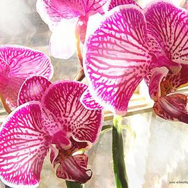 Jane Schnetlage - Magenta Orchids