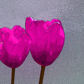 Allen Beatty - Magenta Tulips