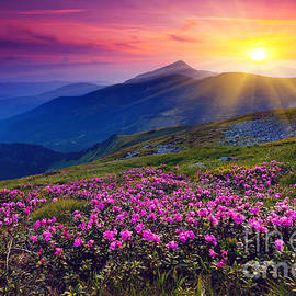 Magic pink rhododendron flowers on summer mountain - Creative Travel Projects