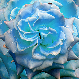 Michele  Avanti - Magical Blue Rose with Raindrops