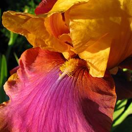 Brooks Garten Hauschild - Magical Colors
