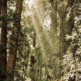 Magical Forest 2 - Ana V  Ramirez