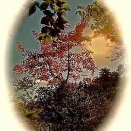 Elizabeth Tillar - Magical Woodland Vignette