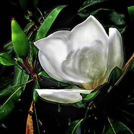 EGiclee Digital Prints - Magnolia Blossom Magnifolia