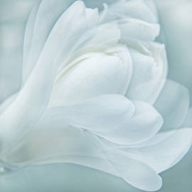 Jennie Marie Schell - Softness of a Aqua Blue Magnolia Flower
