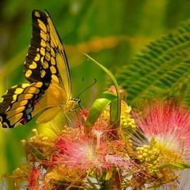 Dennis Nelson - Majestic Swallowtail