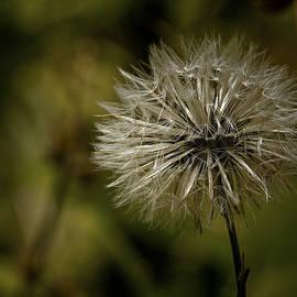 Dave Bosse - Make a Wish
