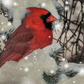Patti Deters - Male Cardinal in Snow #2