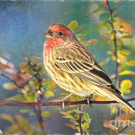 Debbie Portwood - Male Housefinch with Colorful Leaves