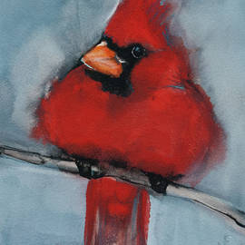 Jani Freimann - Male Northern Cardinal