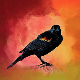 Cyndy Doty - Male Red-Winged Blackbird