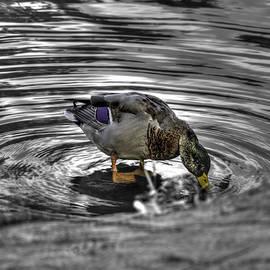 John Straton - Mallard Duck a2