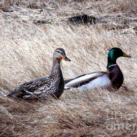 Marcia Lee Jones - Mallards Enjoying The Warmth